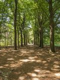 Caminhada através das madeiras Foto de Stock