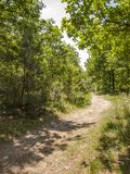Caminhada através das madeiras Fotografia de Stock