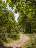 Caminhada através das madeiras Imagens de Stock
