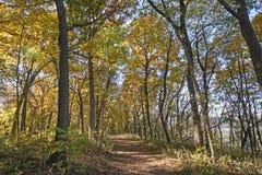 Caminhada através de uma floresta da queda fotografia de stock royalty free