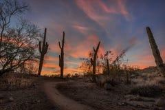 Caminhada através do deserto imagens de stock