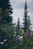 Caminhada cênico do verão de Kootnenay imagens de stock royalty free