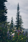 Caminhada cênico do verão de Kootnenay fotografia de stock royalty free
