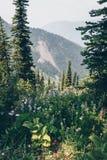 Caminhada cênico do verão de Kootnenay foto de stock royalty free