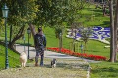 Caminhada com animais de estimação Fotos de Stock Royalty Free