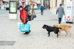 Caminhada com os dois cães que andam na rua da cidade Homem de viagem do andarilho com trouxa enorme e o saco-cama que movem-se f imagens de stock royalty free