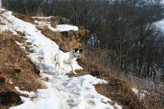 Caminhada com sua recreação feliz saudável do cão Imagens de Stock Royalty Free
