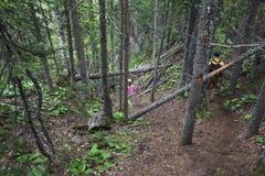 Caminhada da criança e do paizinho na floresta Imagens de Stock