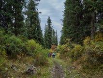 Caminhada da família nas madeiras fotografia de stock