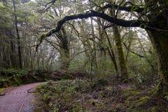 Caminhada da floresta úmida, associações azuis imagens de stock