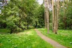 Caminhada da floresta Fotografia de Stock Royalty Free