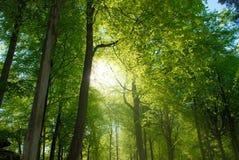 Caminhada da floresta Imagem de Stock