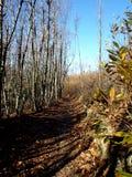 Caminhada da floresta fotografia de stock