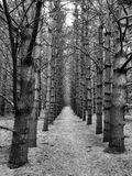 Caminhada da floresta entre as árvores Foto de Stock Royalty Free