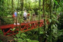 Caminhada da floresta húmida Fotos de Stock Royalty Free