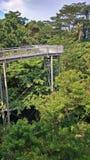 Caminhada da floresta, Singapura Fotos de Stock Royalty Free