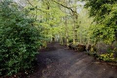 Caminhada da floresta - trajeto Imagem de Stock