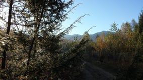 Caminhada da manhã Fotografia de Stock Royalty Free