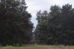 Caminhada da manhã através da floresta da mola é um dia desagradável Fundo imagens de stock
