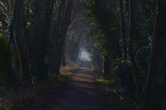 caminhada da manhã de Natal Foto de Stock Royalty Free