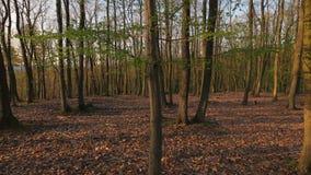 Caminhada da mola da floresta filme