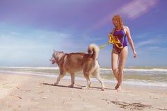 Caminhada da mulher com o cão ronco na praia fotos de stock royalty free