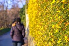 A caminhada da mulher da chegada da mola da flor da flor da extremidade do inverno para trás borrou b foto de stock