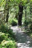 Caminhada da natureza Foto de Stock Royalty Free