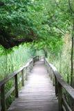 Caminhada da natureza Fotografia de Stock