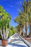 Caminhada da palmeira na praia de Jandia Playa fotos de stock royalty free
