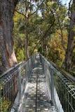 Caminhada da parte superior da árvore Imagens de Stock