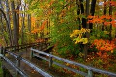 Caminhada da placa através das árvores do outono Fotografia de Stock