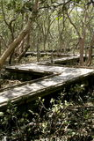 Caminhada da placa através dos manguezais imagem de stock royalty free