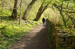 Caminhada da primavera Imagem de Stock Royalty Free