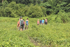 Caminhada da selva imagens de stock royalty free