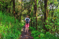 Caminhada da selva Imagem de Stock Royalty Free