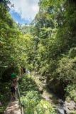 Caminhada da selva de Fiji foto de stock