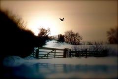 Caminhada da tarde do inverno fotos de stock