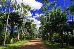 Caminhada das Caraíbas. Foto de Stock