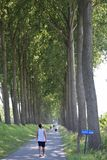 Caminhada de Bélgica entre árvores imagem de stock