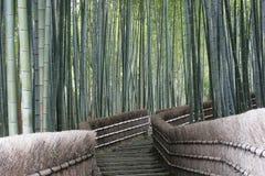 Caminhada de bambu da floresta, foto de stock royalty free