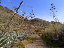 Caminhada de Desertic foto de stock royalty free