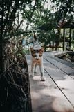 Caminhada de gato de Brown no assoalho de madeira Imagem de Stock