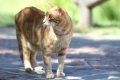 Caminhada de gato em torno do jardim Imagens de Stock Royalty Free