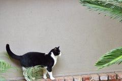 Caminhada de gato na borda do tijolo que procura pássaros imagem de stock royalty free