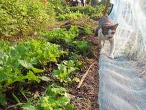 Caminhada de gato no jardim vegetal imagens de stock