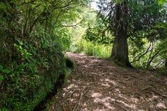 Caminhada de Levada na ilha de Madeira Fotografia de Stock