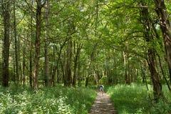 Caminhada de natureza da filha da mãe Imagem de Stock Royalty Free