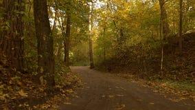 Caminhada de Steadicam através da estrada de floresta do outono vídeo 4K video estoque