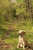 Caminhada do cachorrinho imagens de stock royalty free